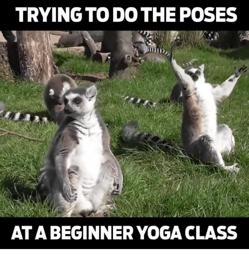 How To Teach Yoga Online With Lifterlms Lmsninjas